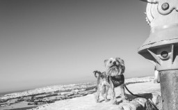 Dog Friendly Malta